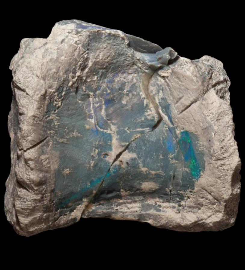 fossile Fostoria nell'opale