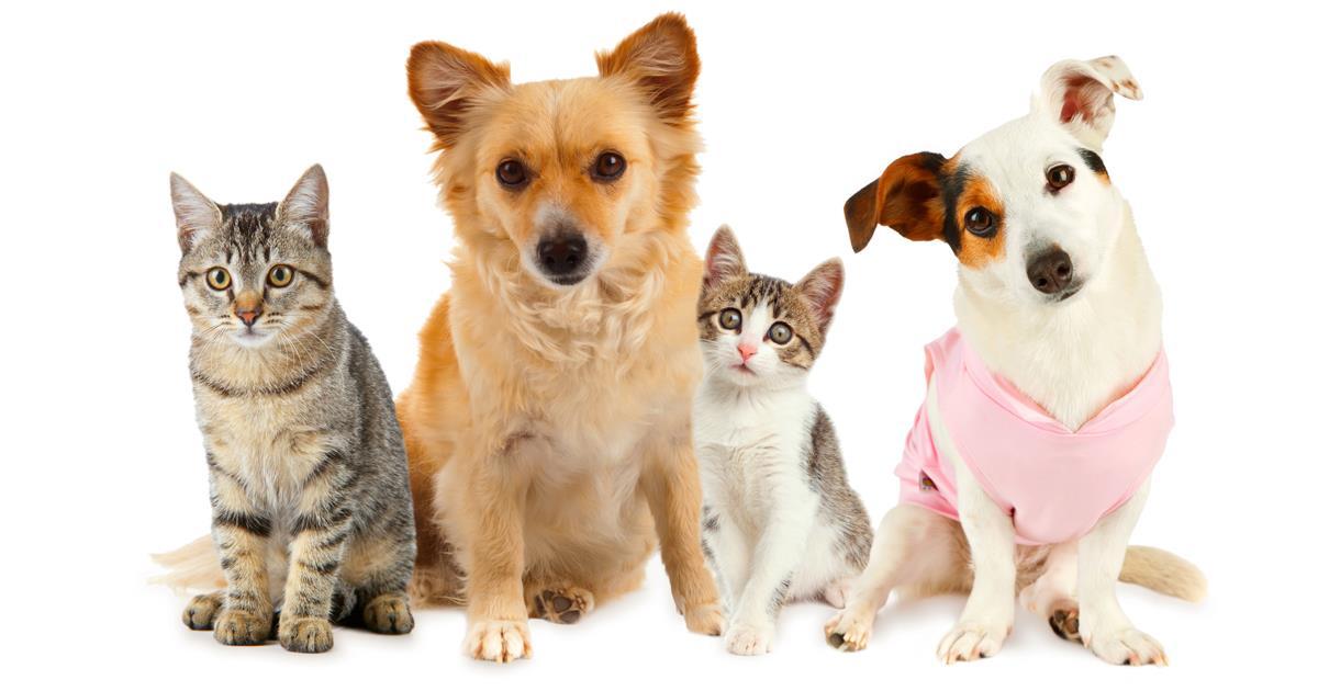 Amici Fedeli Arriva Il Conto In Banca Per Cani E Gatti
