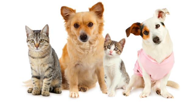 Primo piano di due cani e due gatti