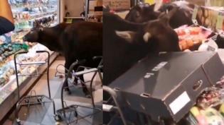 Hong Kong: le mucche irrompono al supermercato e banchettano [VIDEO]