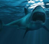 Primo piano di uno squalo