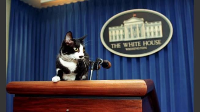 """Il gatto Socks Clinton """"parla"""" agli Stati Uniti d'America"""
