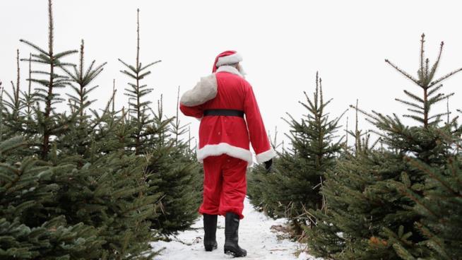 Santa Claus tra gli abeti