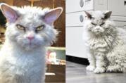 Pompous Albert con la sua classica faccia arrabbiata