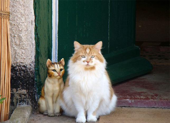 Il gatto Rubble