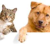 In Italia cani e gatti possono ora avere un conto in banca cointestato con il loro padrone