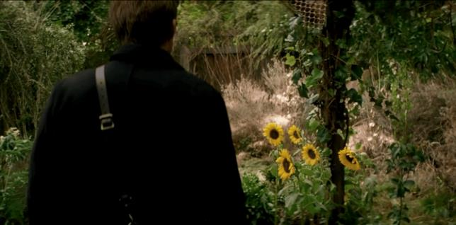 I girasoli nella gabbia di Faraday nel finale di Transcendence