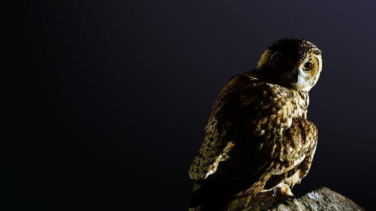 Animali notturni: il primo episodio arriva su Nat Geo Wild dopo il finale di The Walking Dead 9
