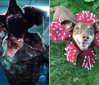 Demogorgone affiancato a un cane con il costume