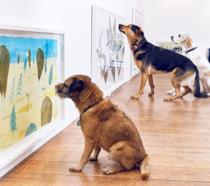 Cani guardano un quadro