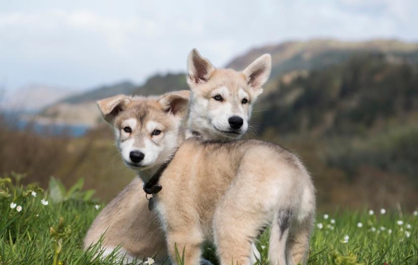 La foto dei cuccioli