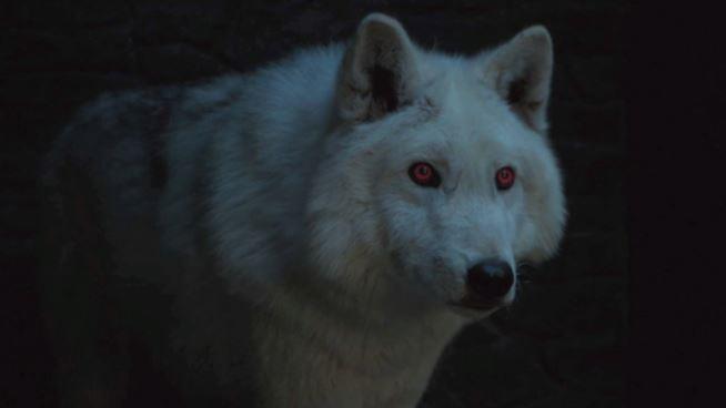 Ghost in un'immagine da Game of Thrones