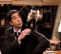 La scimmia Marcel di Friends è ancora viva (e ha un nuovo ruolo in una serie TV)