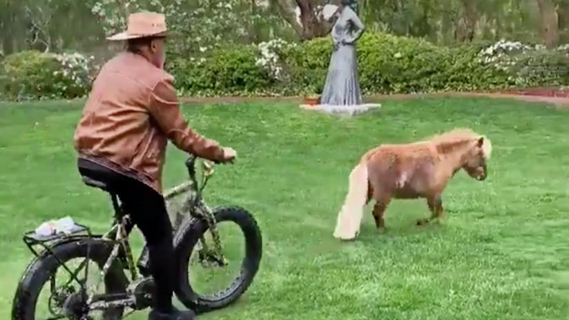 Arnold Schwarzenegger nel video di TikTok