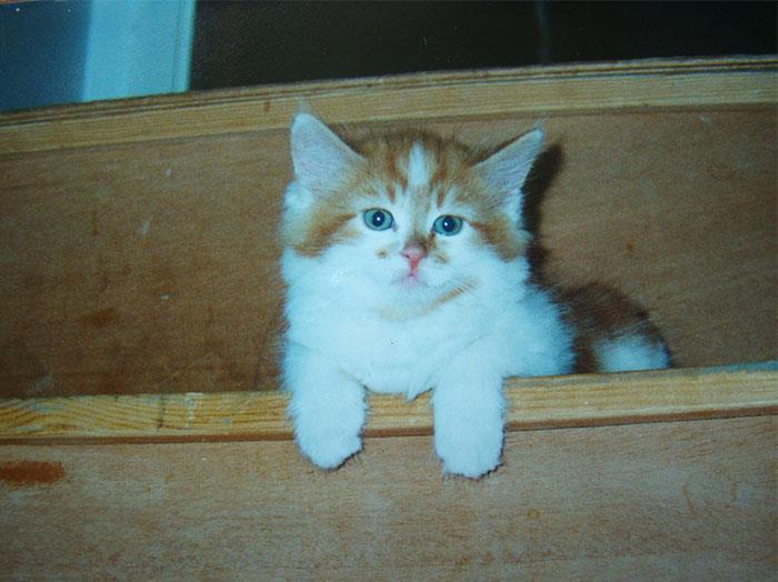 Rubble, il gatto trentenne, quando era un cucciolo