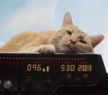Un primo piano del gatto Goose in Captain Marvel