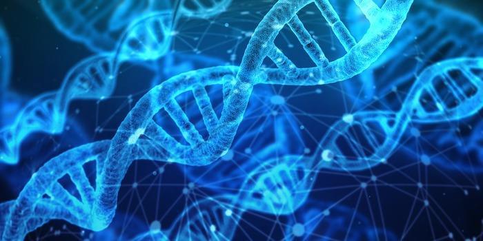 Alcune doppie eliche di DNA