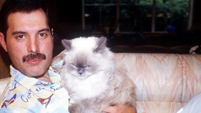 Freddie Mercury e il suo gatto