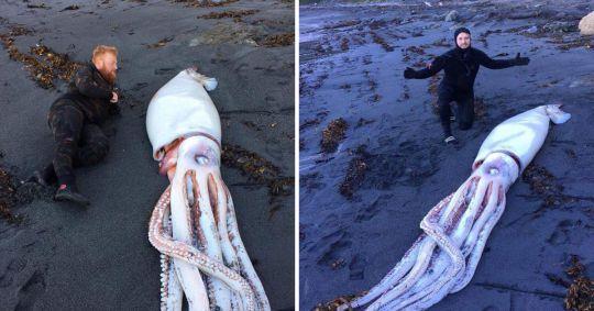 Due dei tre fratelli Aplin in posa col calamaro gigante