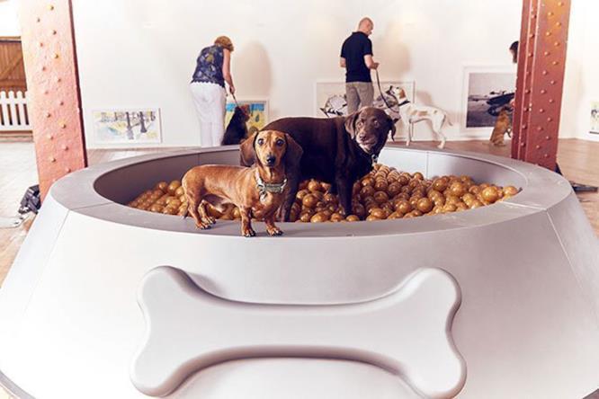 Ciotola piscina per cani