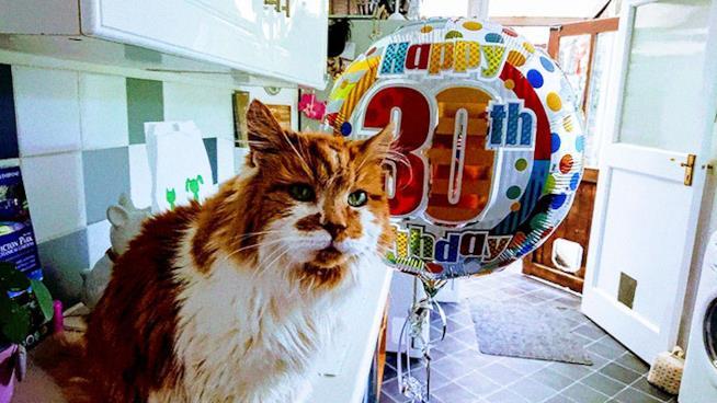 Rubble, il gatto trentenne che vive in Gran Bretagna