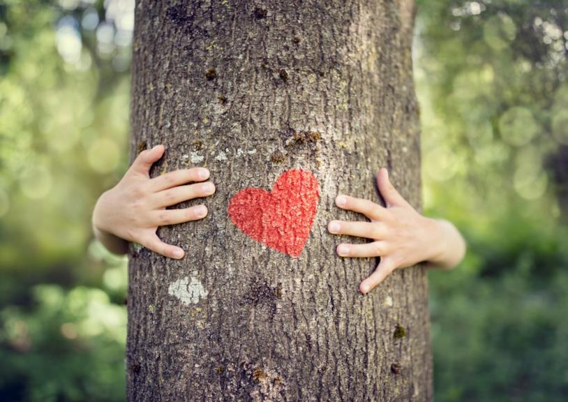 Cuore su un albero