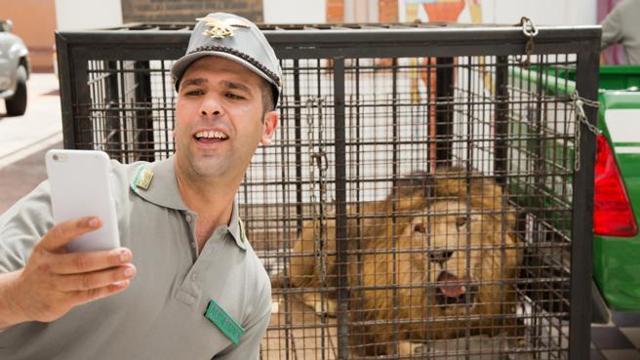 Checco Zalone e il selfie col leone in Quo vado?