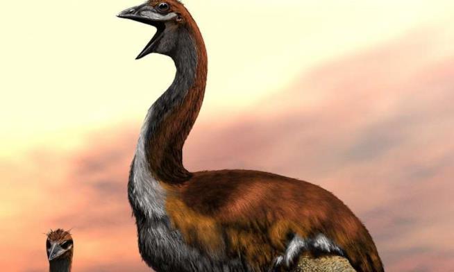 Illustrazione dell'enorme uccello
