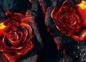 Due rose in fiamme