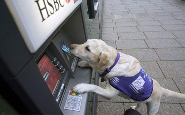 Un cane intento a prelevare denaro da un bancomat