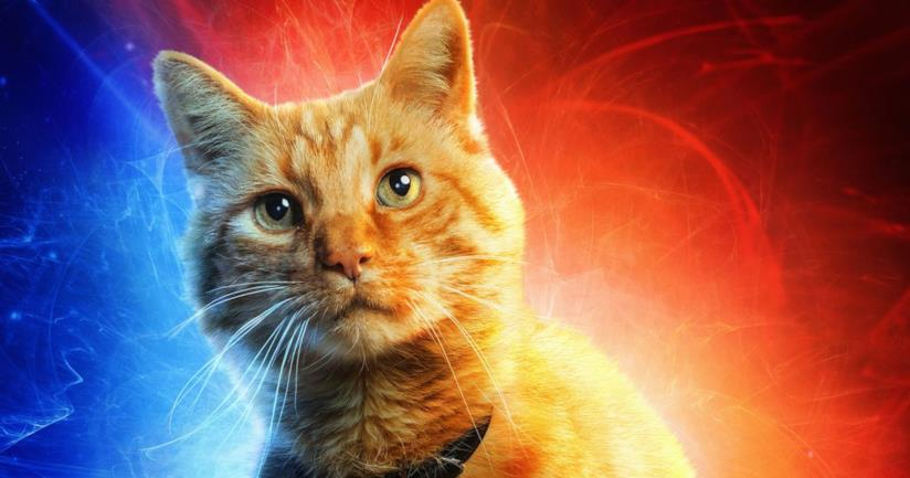Il gatto Goose protagonista del film Captain Marvel