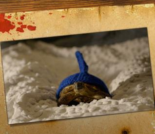 Clyde la tartaruga