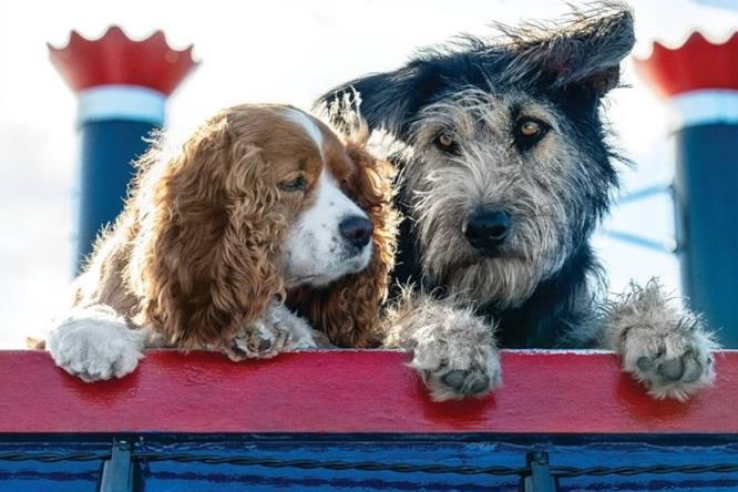 I cani protagonisti del live-action di Lilli e il Vagabondo