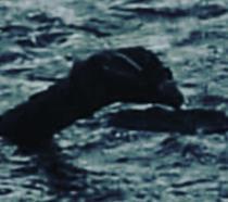 La presunta immagine di Nessie