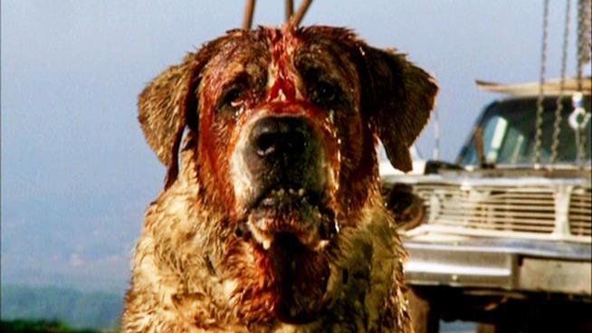 il cane Cujo
