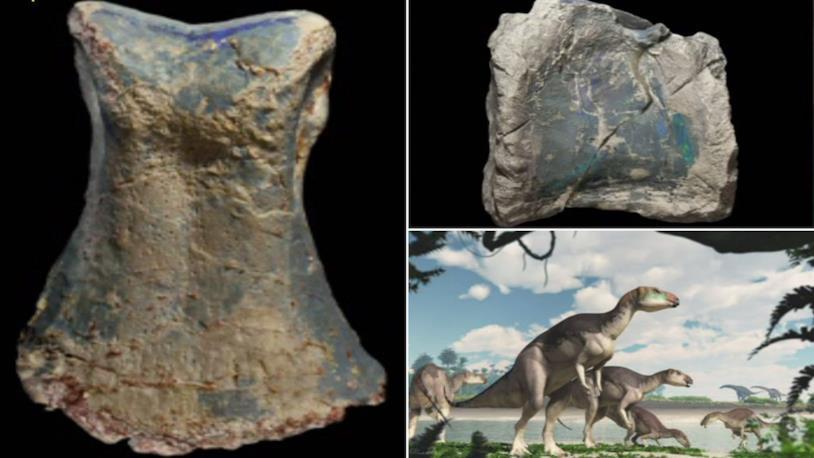 Fostoria fossili opale