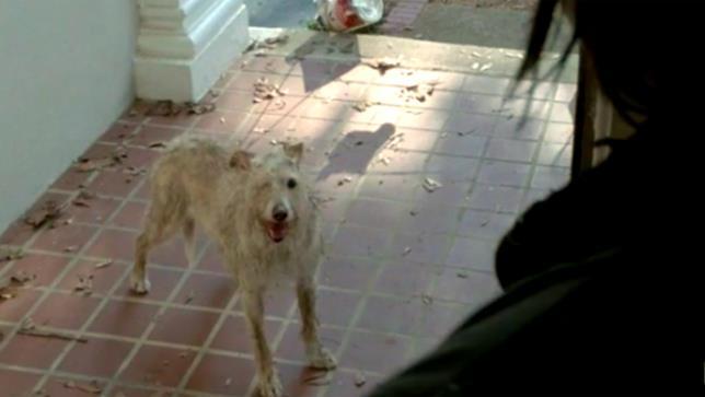 Il cane con un occhio solo di The Walking Dead