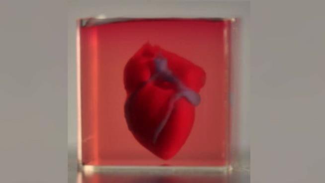 Il cuore stampato in 3D dei ricercatori dell'università di Tel Aviv