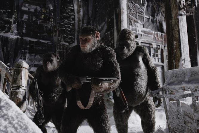 Scimmie in interno innevato