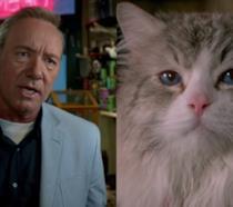 Il gatto protagonista di Una Vita da Gatto