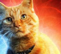 Un primo piano del gatto Goose nel poster di Captain Marvel