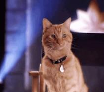Brie Larson e il gatto Goose