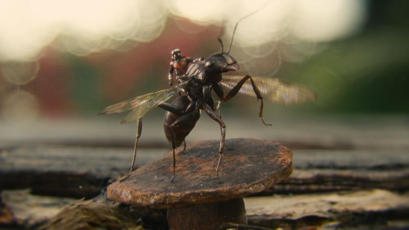 Il supereroe in groppa ad una formica