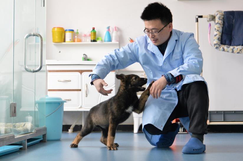 Il cucciolo clonato con uno scienzato