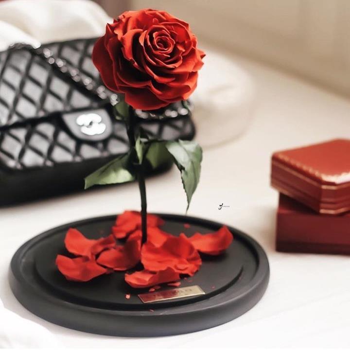 Una rosa incantata che perde petali