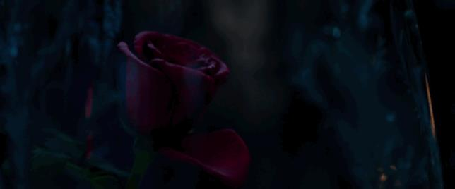 La rosa incantata perde un petalo