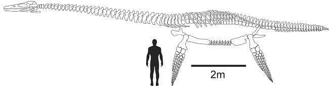 Immagine in scala ridotta mostra la creatura affiancata a un essere umano