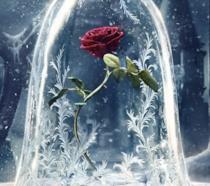 La rosa de La Bella e la Bestia