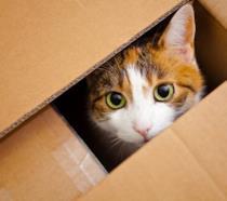 Un gatto in una scatola