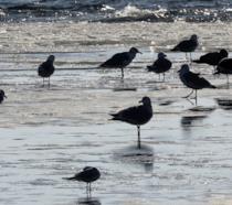 Gabbiani sulla riva